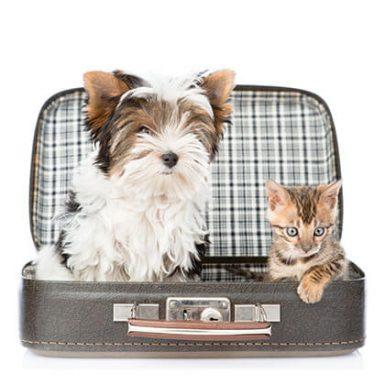 Cómo viajar con mascotas en transporte público