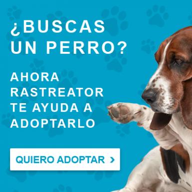 Rastreator.com lanza el portal Adopta un Perro