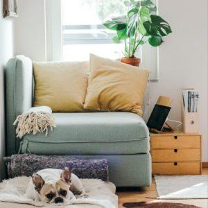 Coberturas curiosas del seguro de hogar