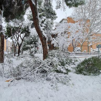 Borrasca Filomena: ¿Qué daños ocasionados por la nieve cubren los seguros?