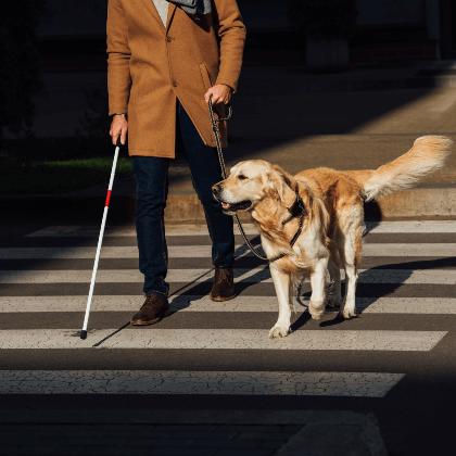 Cómo adoptar un perro guía