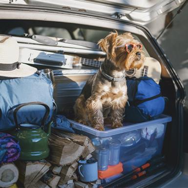 Cómo viajar con mascota en el coche
